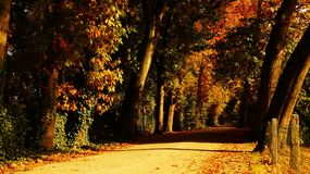 Autumn, Leaves, Dried Stock Images