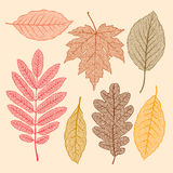 Autumn leaves,  dried leaves set Royalty Free Stock Images