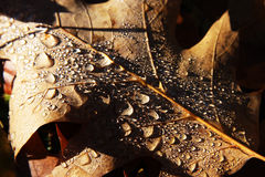 Autumn leaves with drops Stock Image