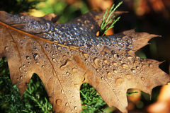 Autumn leaves with drops Stock Photos
