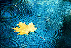 Autumn leaves drops in the water. stock images