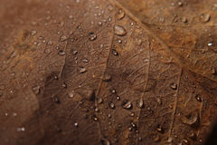 Autumn  leaves with drops of water Stock Photos