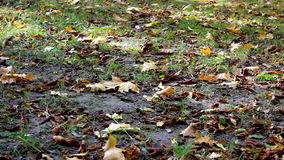 Autumn leaves and dry stock footage