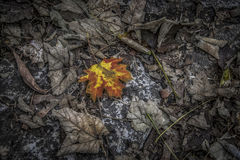 Autumn Leaves. Dry autumn leaves on the ground Royalty Free Stock Photos