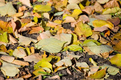 Autumn leaves on the earth Stock Photo