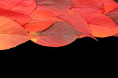 Autumn leaves on edge with copy space. On black background royalty free stock photos