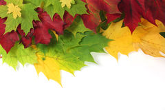 Autumn leaves on edge with white space. Autumn leaves on edge of image with white space stock photo
