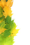 Autumn leaves on edge with white space. Autumn leaves on left edge with white space stock images