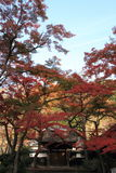 Autumn leaves at Engaku temple Royalty Free Stock Images