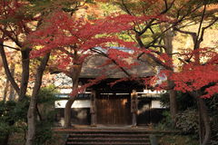 Autumn leaves at Engaku temple Stock Photography