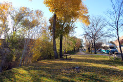 Autumn Leaves in the Evening Light. Autumn trees bask in the evening light by the river Royalty Free Stock Photography