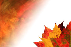 Autumn leaves faded background Royalty Free Stock Photo