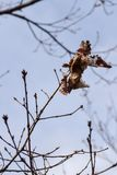Autumn Leaves Fading zum Skelett lizenzfreies stockfoto