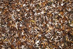 Autumn Leaves Fall arkivfoto