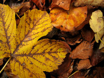 Autumn leaves - Fall. Different colors autumn leaves on the ground Stock Photography