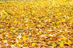 Autumn Leaves Fall imagens de stock royalty free
