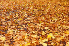 Autumn leaves fall
