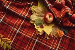 Autumn leaves fall apples warm blanket concept. Cosy warm blanket. Autumn apples and fall leaves background Royalty Free Stock Image