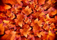 Autumn Leaves. Fall Background. Color Explosion Stock Images