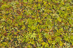 Autumn leaves fall background. Stock Photos