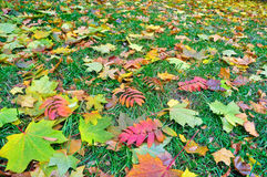 Autumn, leaves fall. Royalty Free Stock Photography