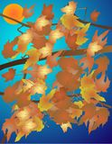 Autumn leaves fall in color illustration.. Royalty Free Stock Images
