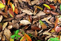 Autumn Leaves Fall. Fall Natural Outdoor on Old Concrete Background stock photo