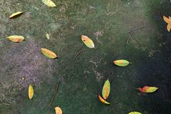 Autumn Leaves Fall. Fall Natural Outdoor on Old Concrete Background royalty free stock photo