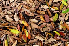 Autumn Leaves Fall. Fall Natural Outdoor on Old Concrete Background stock image