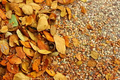 Autumn leaves fall on the ground. Orange leaves fall background Stock Images