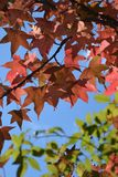 Autumn Leaves Fall Stock Images