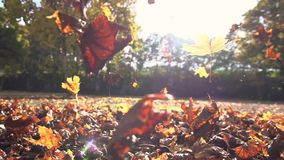 Autumn leaves fall season nature colorful leaves slow motion