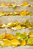 Autumn leaves on stairs Royalty Free Stock Photo