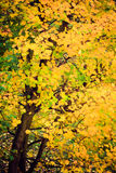 Autumn leaves fall trees nature background Stock Image