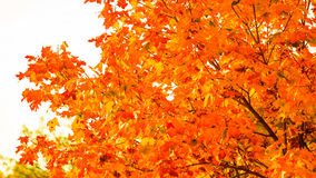 Autumn leaves fall trees nature background Stock Images