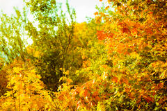 Autumn leaves fall trees nature background Stock Photography