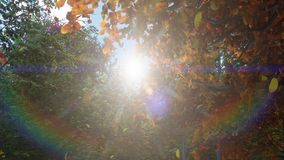 Autumn leaves fall from trees in autumn Park. Autumn colorful Park on a Sunny day. 3D Rendering. Autumn leaves fall from trees in autumn Park. Autumn colorful royalty free stock photos