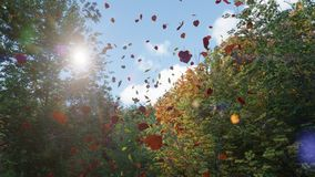 Autumn leaves fall from trees in autumn Park. Autumn colorful Park on a Sunny day. 3D Rendering. Autumn leaves fall from trees in autumn Park. Autumn colorful stock images