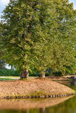 Autumn leaves fall from the trees at sunny day. Castle park in t. He netherlands, Vaassen, Gelderland stock photography