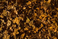 Autumn leaves fallen on the floor of Madrid royalty free stock image