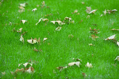 Autumn leaves fallen on grassland Stock Photography