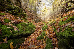 Autumn leaves fallen on green moss in a valley in the forest Royalty Free Stock Images