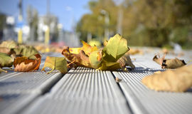 Autumn leaves. Fallen leaves on the ground Royalty Free Stock Photos