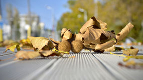 Autumn leaves. Fallen leaves on the ground Stock Photo