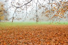 Autumn leaves fallen on the ground in misty forest park Stock Photos