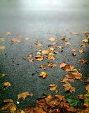 Autumn leaves fallen on a rainy road leading to fog Royalty Free Stock Photo