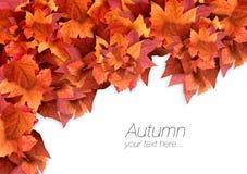Autumn Leaves Fallhintergrund Abstrakte strukturierte Fractals Stockfotos