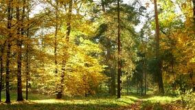 Autumn Leaves Falling vídeos de arquivo