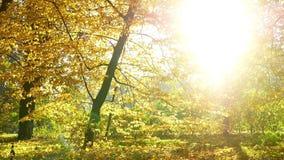 Autumn Leaves Falling video estoque