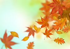 Autumn Leaves Falling Royalty Free Stock Image